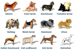breeds-of-dogs-variation-within-species-300x201